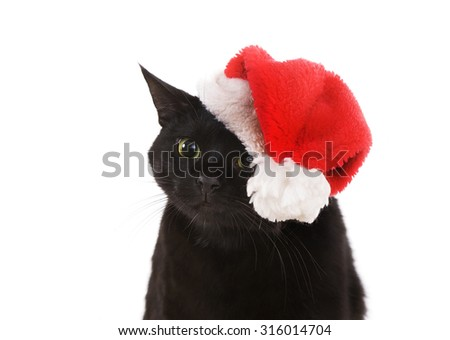 Funny Black Cat Santa - Cute Christmas Cat, Christmas pet with Santa Claus hat