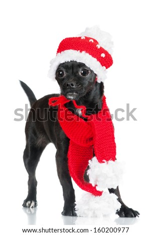 funny black dog in a hat and scarf