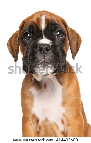 Funny Boxer puppy portrait. Isolated on white background - stock photo