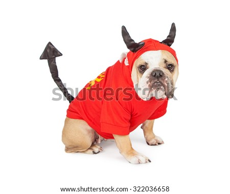 Funny Bulldog breed dog wearing a devil costume for Halloween - stock photo