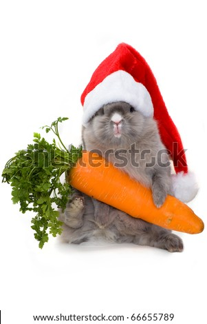 Funny bunny in the santa claus hat holding a carrot