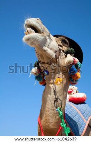 Funny camel to carry tourists on the beach - stock photo
