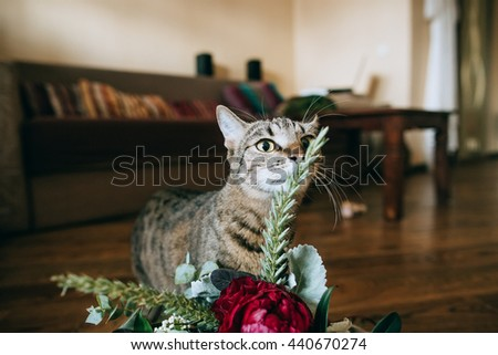funny cat and beautiful wedding bouquet on wood background