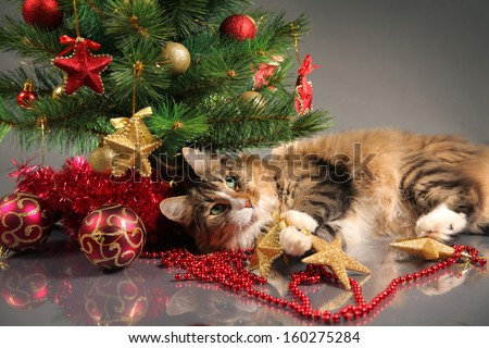funny cat and christmas tree - stock photo