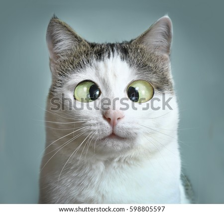 Exceptionnel Funny Cat At Ophthalmologist Appointmet Squinting Close Up Portrait