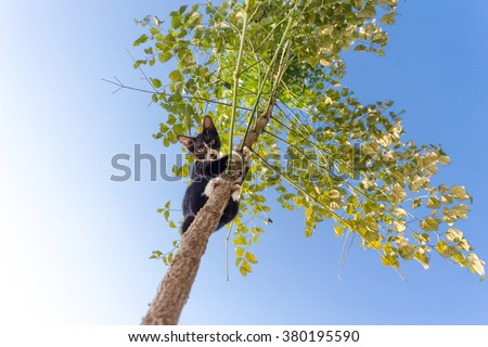 Funny cat climbing at the tree and observing down, focus on the face. - stock photo