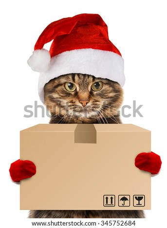 Funny cat - delivery service. Postman santa - cat delivering a big package. - stock photo