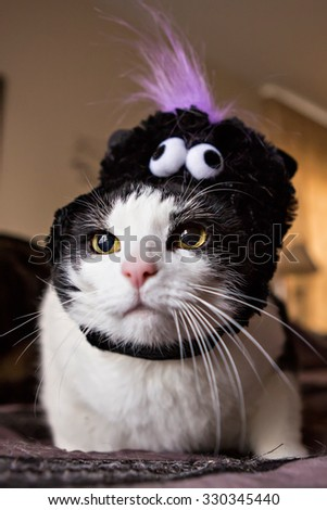 funny cat dressed for halloween - Funny Cat Halloween