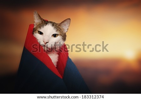 Funny cat dressed in a robe colored paper - stock photo
