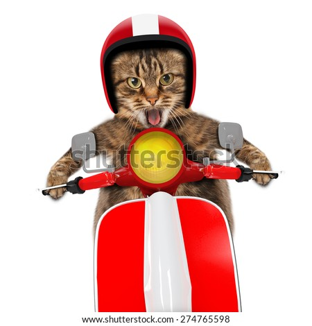 funny cat driving a moped - stock photo