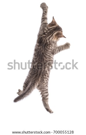 Funny cat hanging isolated on white background