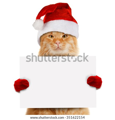 Funny cat in christmas hat holding white banner - stock photo