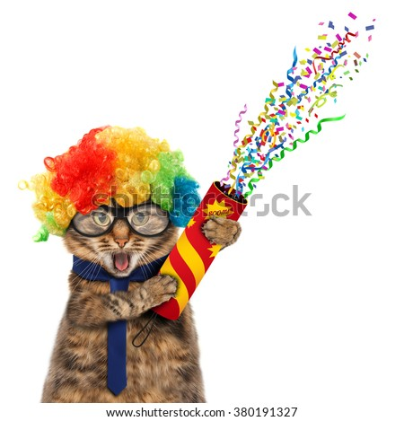 Funny cat in costume clown. Funny cat in wig with petard