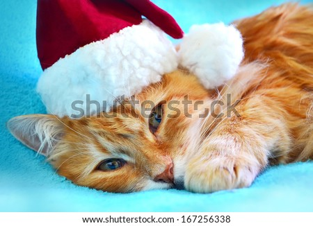 Funny cat in Santa Claus red hat - stock photo