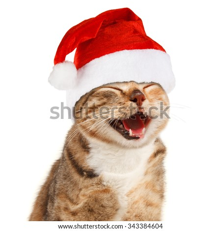 Funny cat in Santa Claus xmas red hat on white background - stock photo