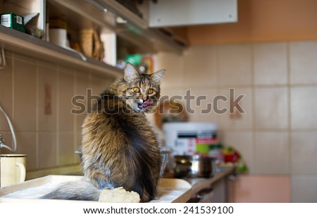 Funny cat in the kitchen - stock photo