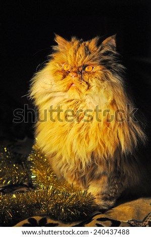 funny cat in the New Year - stock photo