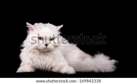 Funny cat is isolated on a black background - stock photo