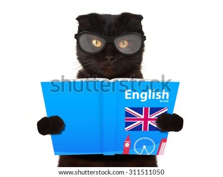 Funny cat is learning English. Cat reading a book. British cat reading a book. - stock photo