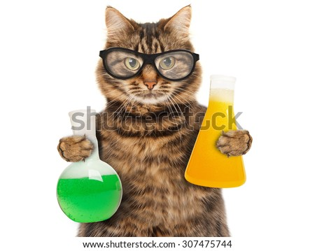 Funny cat is studying chemistry. Cat holding bulb with liquid. - stock photo