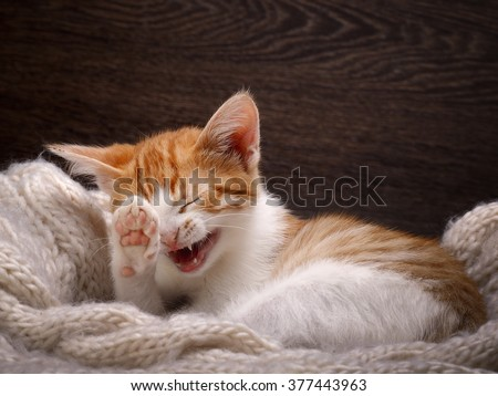 Laughing Cat Stock Images, Royalty-Free Images & Vectors ...