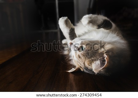 Funny cat lying back on wood floor - stock photo