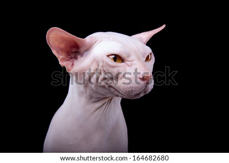 Funny cat on a black background - stock photo