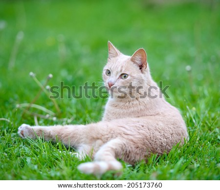 Funny cat on the green grass - stock photo