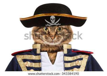 Funny cat - pirate - stock photo