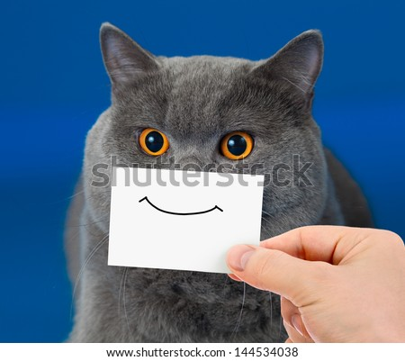 funny cat portrait with smile on card - stock photo