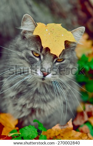 funny cat sits in fallen leaves with a leaf on his head - stock photo