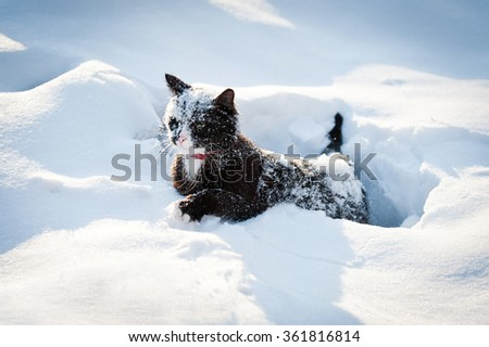Funny cat walking in a deep snow - stock photo