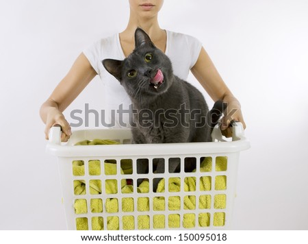 Funny cat wash - cat in white plastic basket with colorful laundry to wash - stock photo