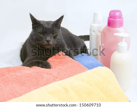 Funny cat wash - serious cat on colorful laundry to wash - stock photo