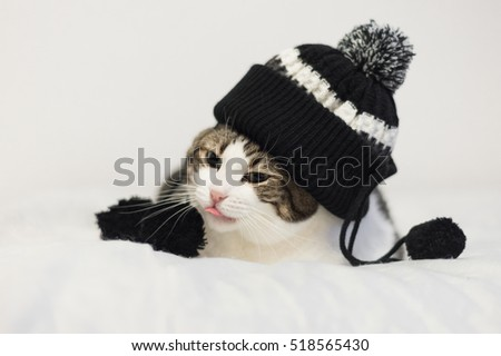 Funny cat wearing a warm hat with pompon. Lying  on a blanket. Winter season concept.