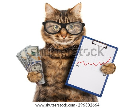 Funny cat with a folder for presentations. Money in hand. Business scene. - stock photo