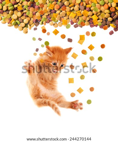 Funny cat with appetite eats cat dry food. Isolated.