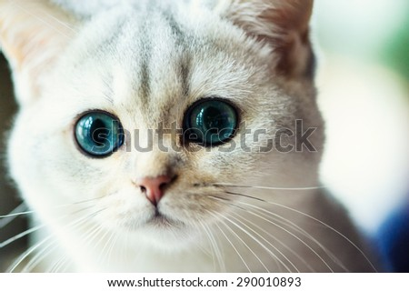 Gray Cat With White Paws With Head Tilt