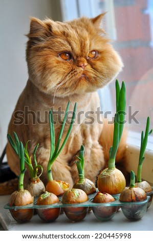 Funny cat with green onions - stock photo