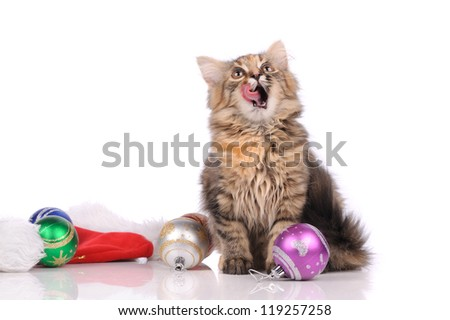 funny cat with New Year's toys isolated on white - stock photo