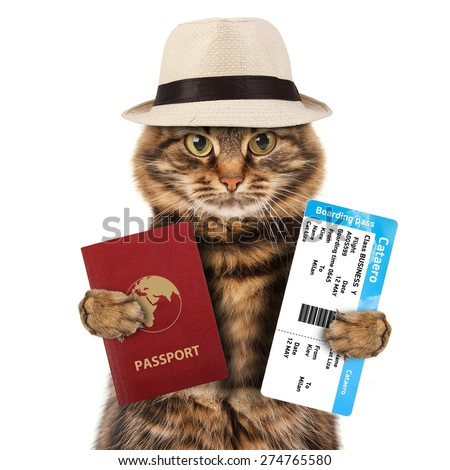 funny cat with passport and airline ticket , isolated on white background - stock photo