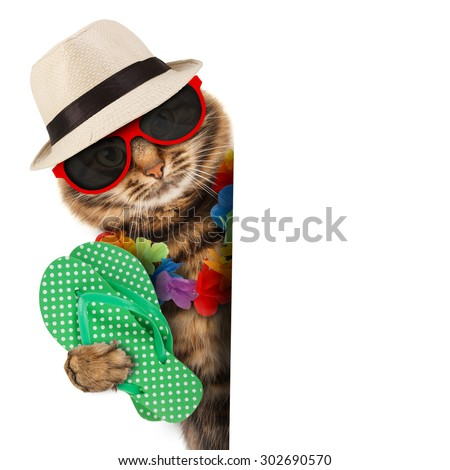 Funny cat with passport and airline ticket , isolated on white background. Funny cat going on vacation. - stock photo