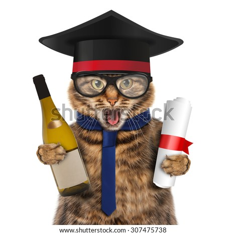 Funny cat with wine and diploma. Happy cat with a university degree. - stock photo