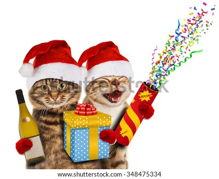 Funny cats in christmas hats with present, wine, and petard - stock photo