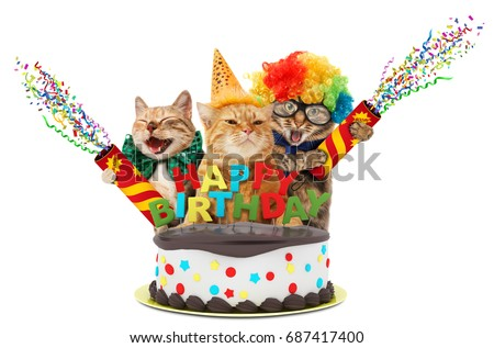 Funny Cats Petard Birthday Cake They Stock Photo Royalty Free
