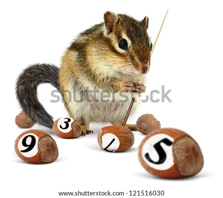 Funny chipmunk playing snooker with nuts - stock photo