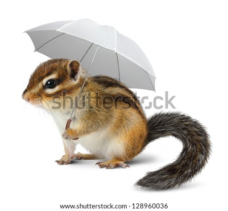 Funny chipmunk with umbrella on white, weather concept
