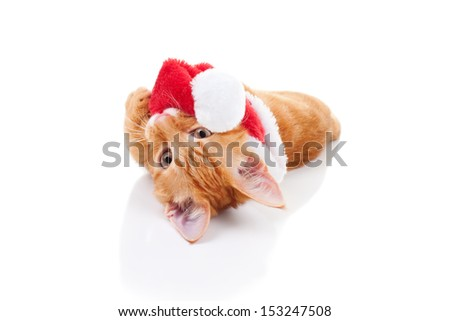 Funny Christmas kitten playing with Santa hat - cat - stock photo