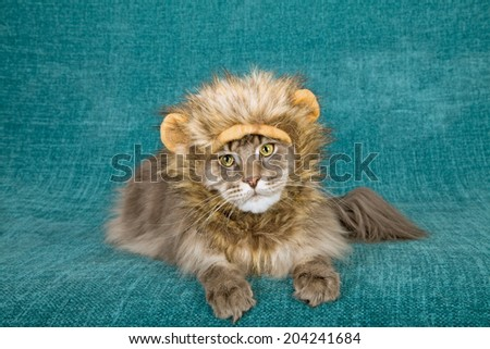 Funny comical cat wearing lion mane wig with yellow ears on blue green background  - stock photo