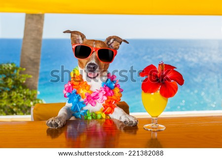 funny cool dog drinking cocktails at the bar in a  beach club party with ocean view - stock photo